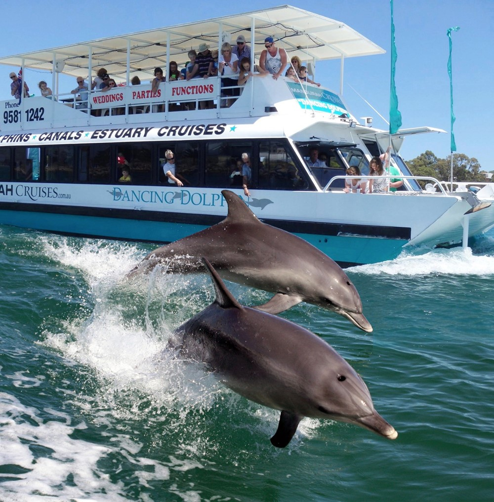 Boat and Dolphins.jpg